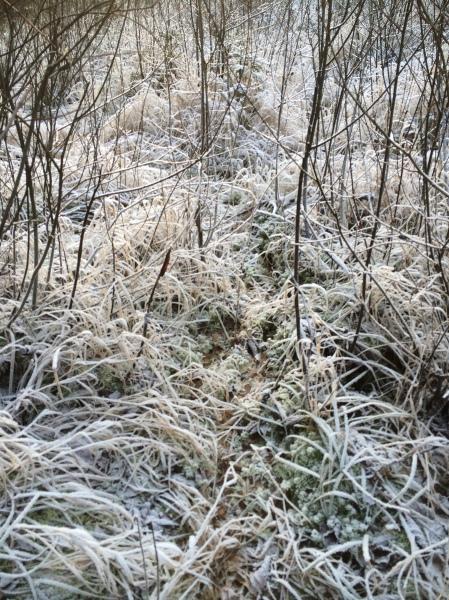 A fairly clear trail made by a fox